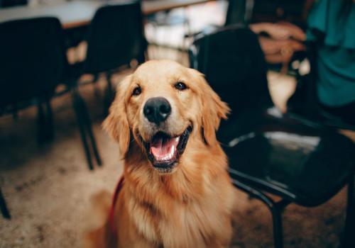 Tips voor spreekbeurt over je favoriete hond